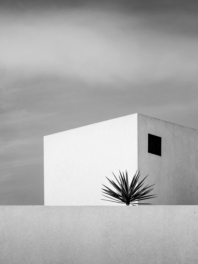 Пальма на острове Фуэртевентура, напоминающая об отпуске мечты. Фотограф Рената Васингер