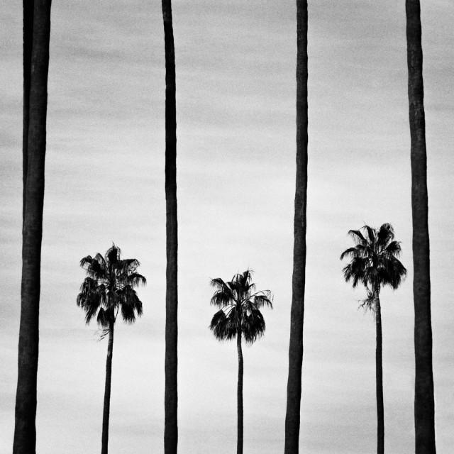 Пальмы. Фотограф Кайл Хоффманн