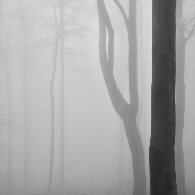 «Лесные интерьеры». Северная Богемия, декабрь 2020 года. Фотограф Петр Новак