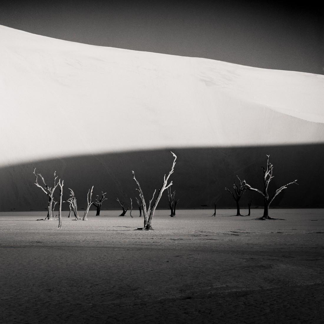 3-е место Black and White Minimalist Photography Prize 2020–2021. Деревья в Намибии. Фотограф Гектор Искьердо Селива