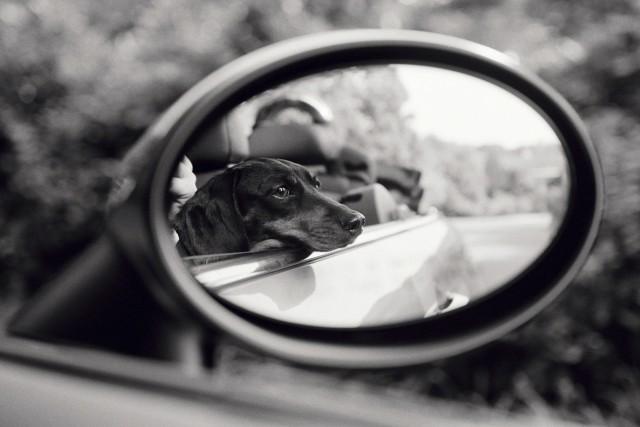 Зеркало заднего вида, Ист-Хэмптон, 2007. Фотограф Присцилла Раттацци