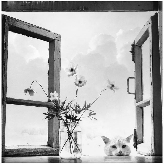 Анемоны, 1976. Фотограф Галина Лукьянова