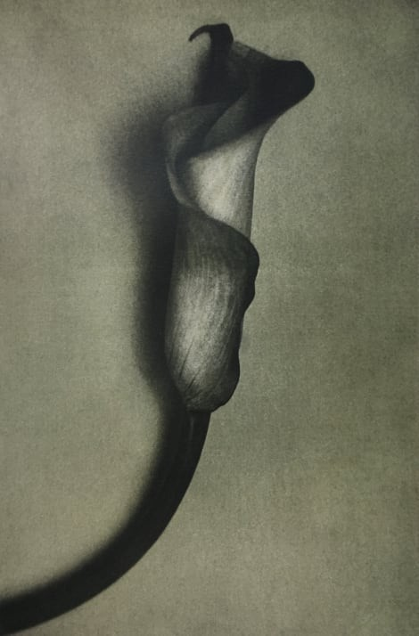 Калла, 1998 год. Фотограф Шейла Мецнер