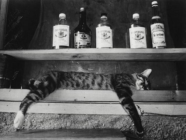 Спящий кот. Из серии «Гримасы утомлённого села». Фотограф Римальдас Викшрайтис