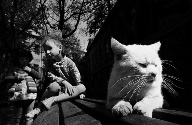 Белый кот. Фотограф Ромуальдас Пожерскис