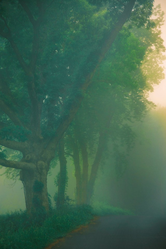 Фотопроект «Сад», 2020 год. Фотограф Эрик Мадиган Хек