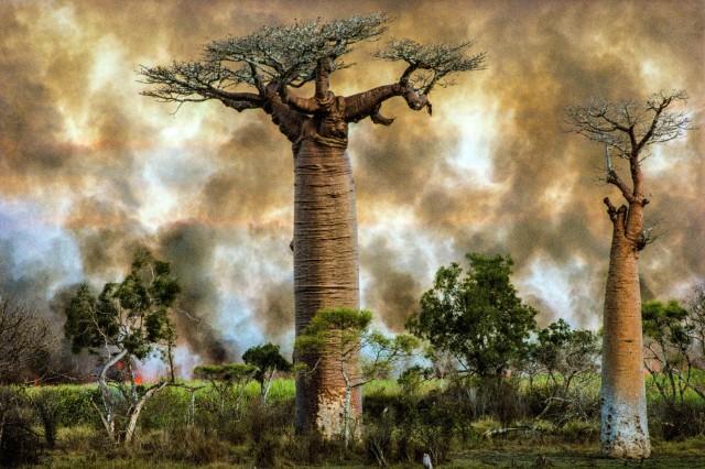 Мадагаскар, 1994. Фотограф Паскаль Мэтр