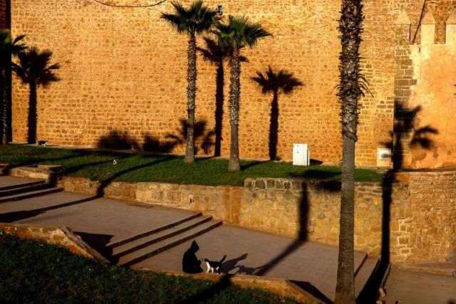Человек с кошкой в Марокко. Фотограф Паскаль Мэтр