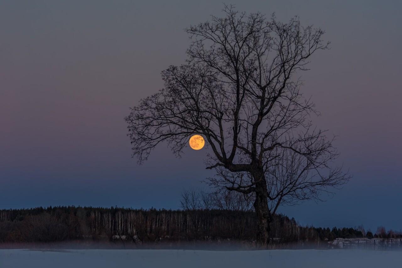 Номинант, 2021. «Однажды ночью». Восход полной луны. Автор Валерий Горбунов