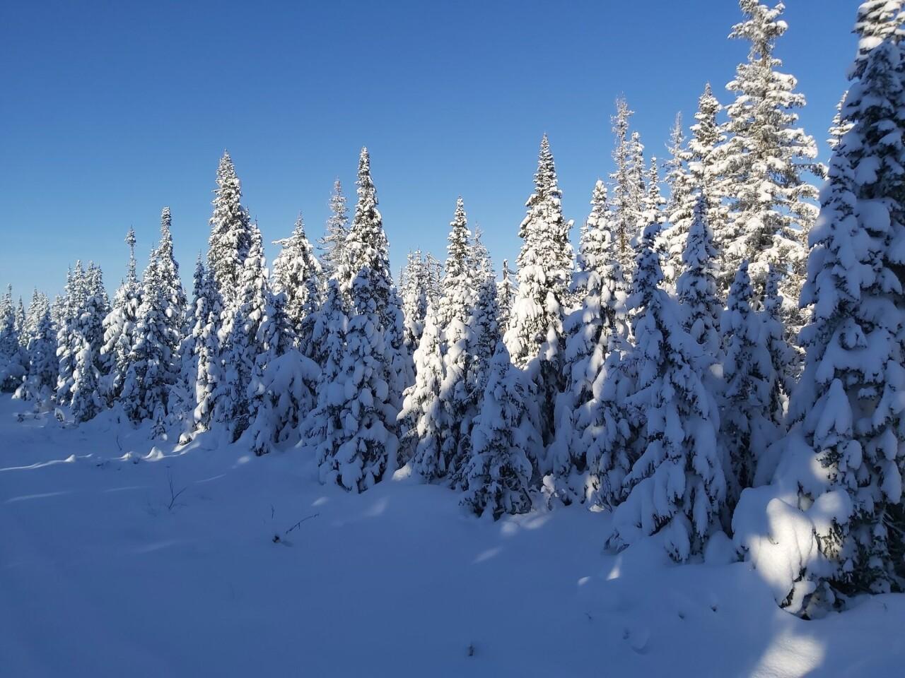 Номинант, 2021. Север, тайга, первый снег. Автор Василий