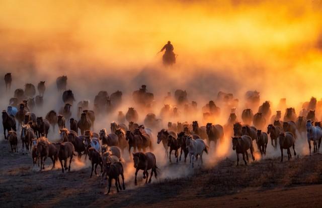 Лауреат категории «Национальная премия», Малайзия, 2020. «Монгол без лошади, как птица без крыльев». Автор Тянь Санг Кок