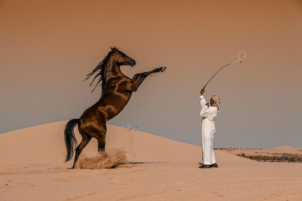 Лауреат категории «Национальная премия», Саудовская Аравия, 2020. Дрессировка коня в Абу-Даби. Автор Аббас Алкхамис