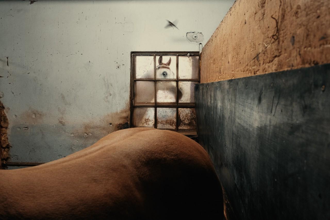 Финалист в категории «Уличная фотография». «Открытая» номинация, 2021. Автор Франческо Лопацио