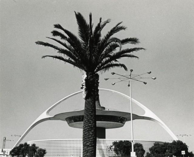 Пальма. Лос-Анджелес, 1971. Фотограф Гэри Крюгер
