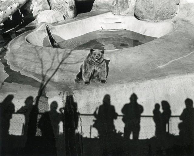 Зоопарк Лос-Анджелеса, 1971. Фотограф Гэри Крюгер