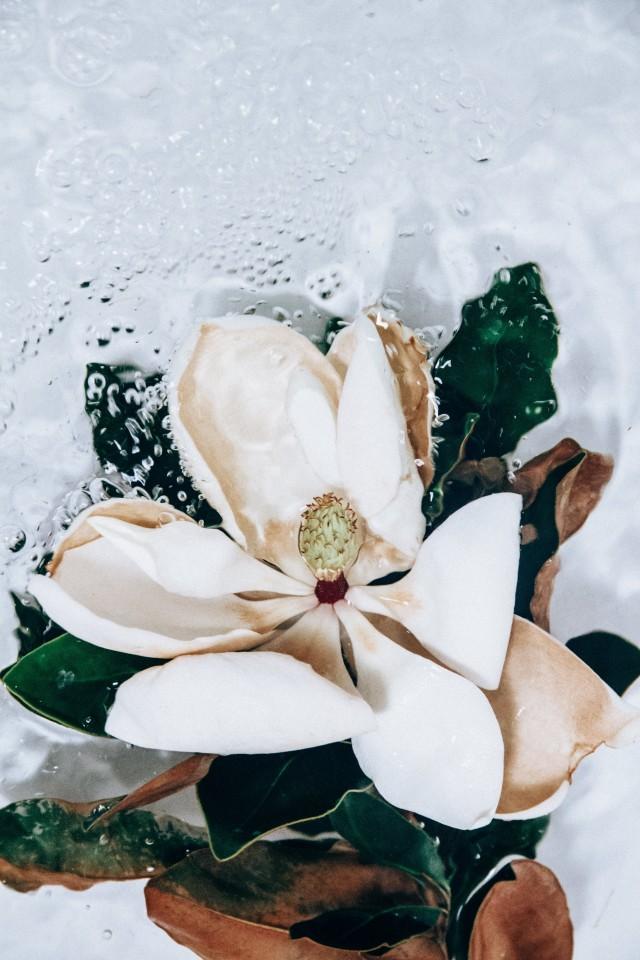 Серия «Цветы под водой». Фотограф Лиза Соргини