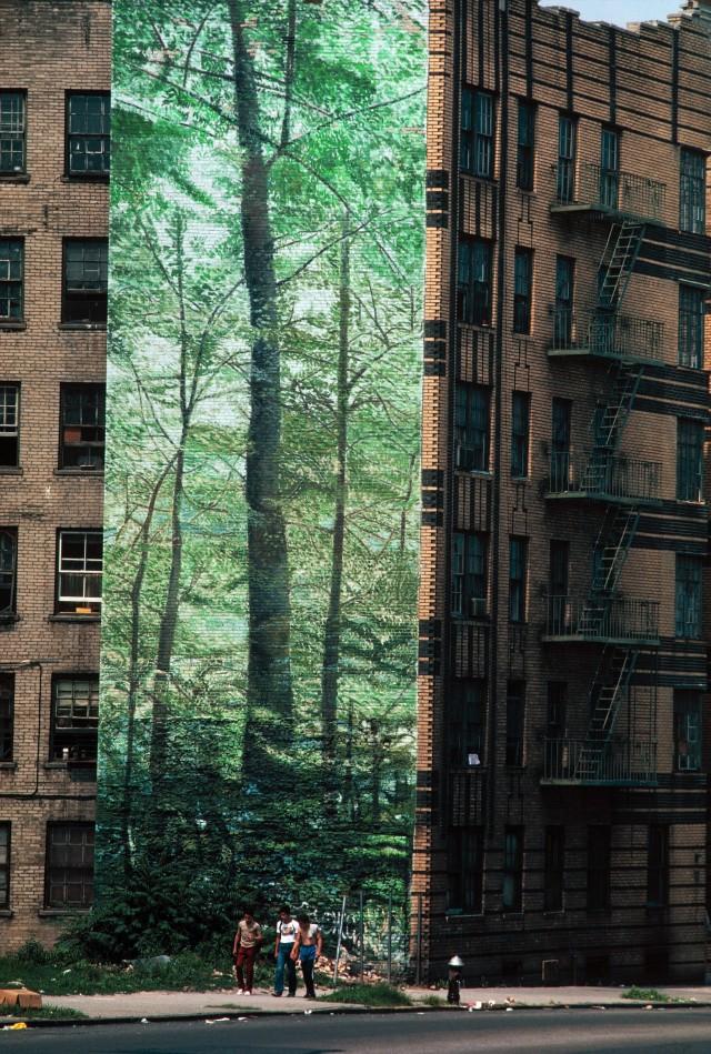 Банер с изображением леса в Южном Бронксе, Нью-Йорк, США. Фотограф Томас Хёпкер