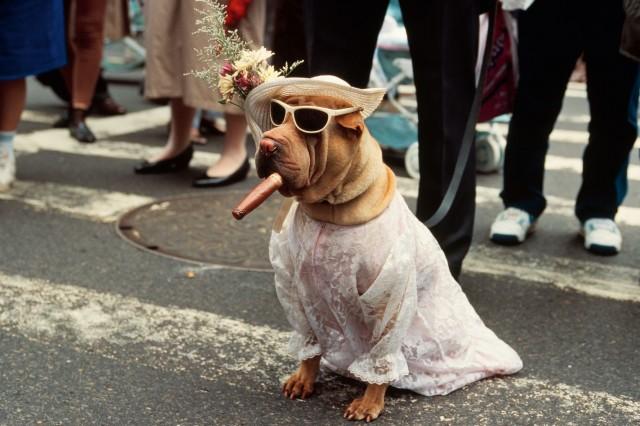 Собака с сигарой на Параде шляпок, Нью-Йорк, 1983 год. Фотограф Томас Хёпкер