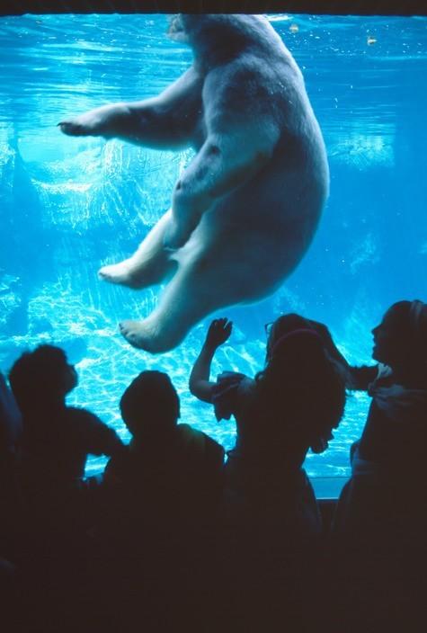 Зоопарк в Центральном парке, Нью-Йорк, США, 1992 год. Фотограф Томаса Хёпкер