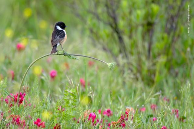 Победитель среди юных фотографов 10 лет и младше, 2020. «Идеальное равновесие». На весеннем лугу в Андалусии, Испания. Автор Андрес Луис Домингес Бланко