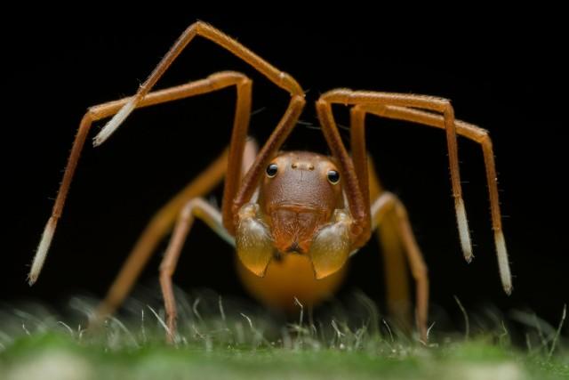 «Обманчивое обличье». Паук-скакун, подражающий муравьям. Победитель в категории «Портреты животных». Автор Рипан Бисвас
