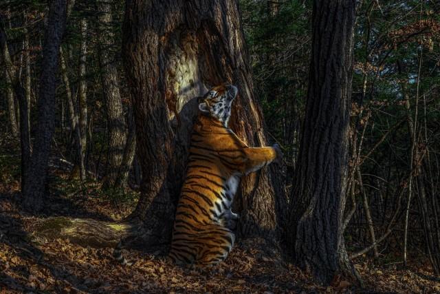 Wildlife Photographer 2020 – престижный международный конкурс фотографий дикой природы