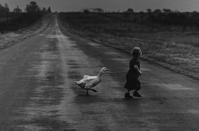 Девочка с гусем. Фотограф Педро Луис Раота