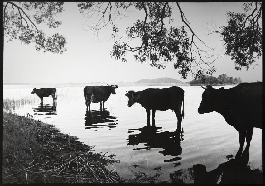 Летний полдень, 1986. Фотограф Михаил Жилинский