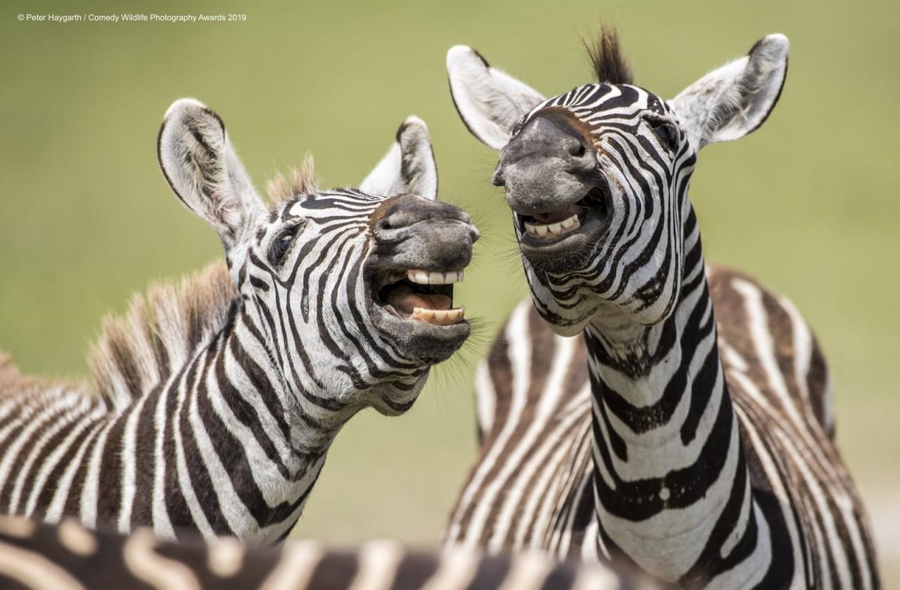Уморительные финалисты фотоконкурса Comedy Wildlife 2019 (25)