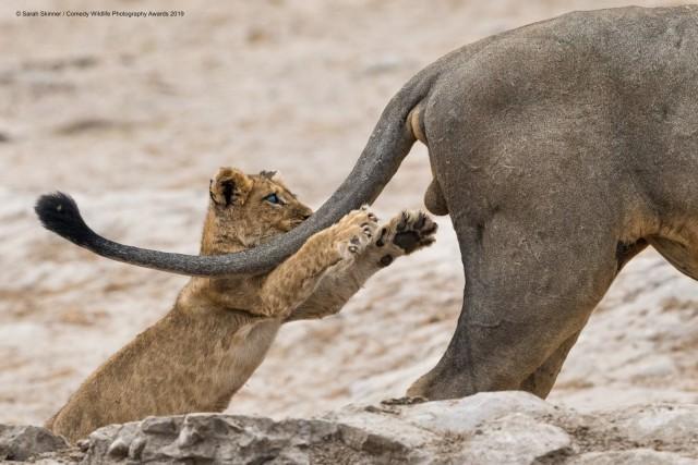 Уморительные финалисты фотоконкурса Comedy Wildlife 2019 (29)
