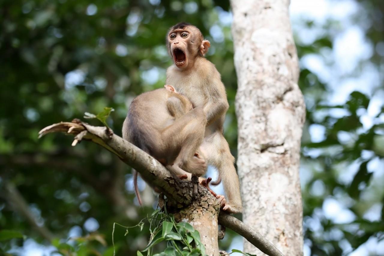 Comedy Wildlife Photo Awards 2020. «Обезьяньи дела», Борнео. Автор Меган Лоренц