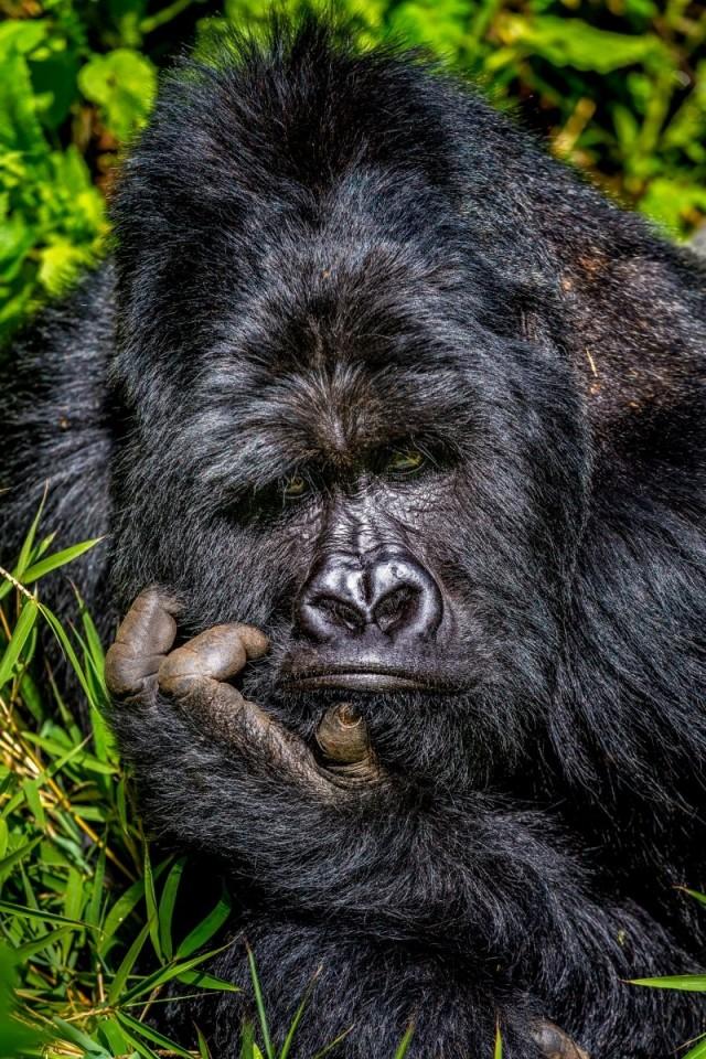 Comedy Wildlife Photo Awards 2020. «Скука». Автор Маркус Вестберг