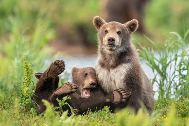 Comedy Wildlife Photo Awards 2020. «У всех есть такой друг». Автор Ярин Кляйн