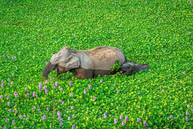 Comedy Wildlife Photo Awards 2020. «Мамочка, это тебе». Автор Кунал Гупта