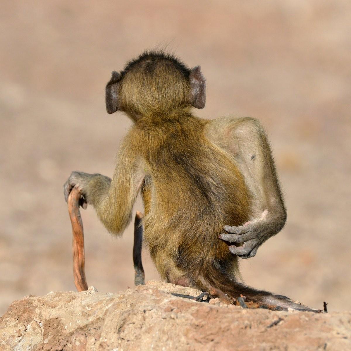 Comedy Wildlife Photo Awards 2020. «Социальная раскованность в Ботсване». Автор Мартин Грейс