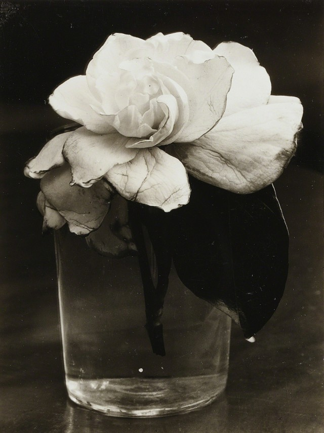 Камелия, 1928. Фотограф Консуэло Канага