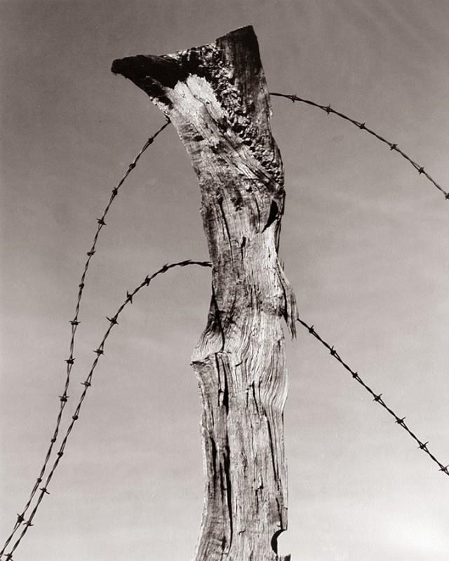 Столб забора с колючей проволокой, 1930. Фотограф Уиллард Ван Дайк