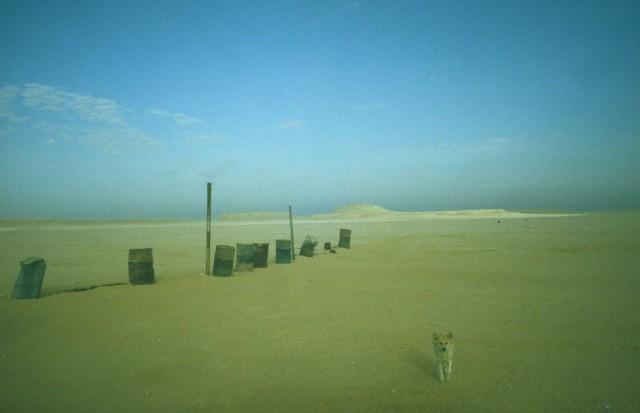Собака и бочки, контрольно-пропускной пункт, Иордания. Фотограф Долорес Марат