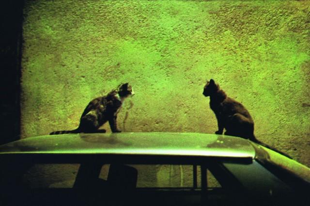 Две кошки ночью, серия «Город и ночь», 1998 год. Фотограф Долорес Марат