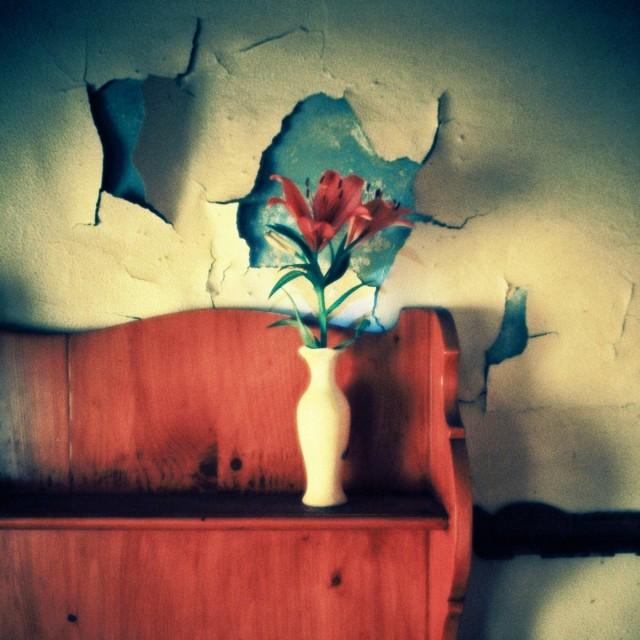 Цветы в комнате бабушки в заброшенном семейном доме. Фотограф mczoum