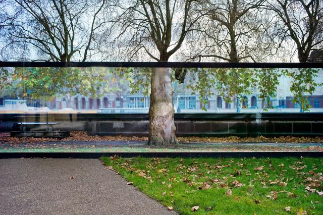 Дерево, Лондон. Фотограф Ник Тёрпин