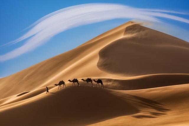 Караван на ветру. Автор Дмитрий Архипов
