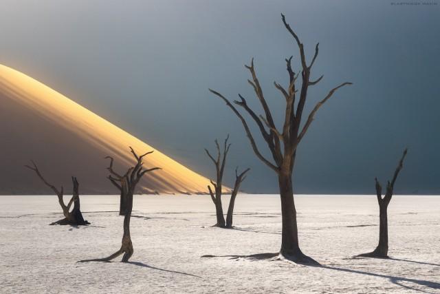 «Руки пустыни». Национальный парк Намиб-Науклуфт, Намибия. Автор Максим Сластников