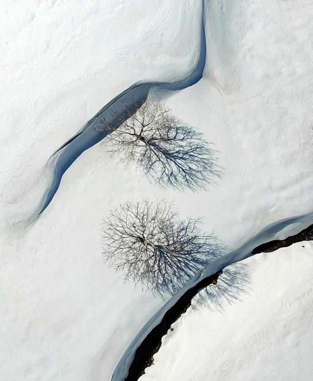 Два дерева. Фотограф Дарвишали Мехри