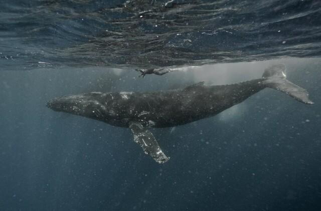 Категория «Подводная фотография», 6-ая фотопремия 35AWARDS. Фотограф Алексей Зозуля