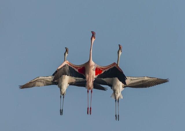 Категория «Дикий животный мир», 6-ая фотопремия 35AWARDS. Фотограф Gyana Mohanty