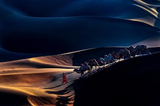 Поощрительная премия в категории «Путешествия и приключения», 2020. Верблюды среди пустынных дюн. Автор Юньхуа Ю
