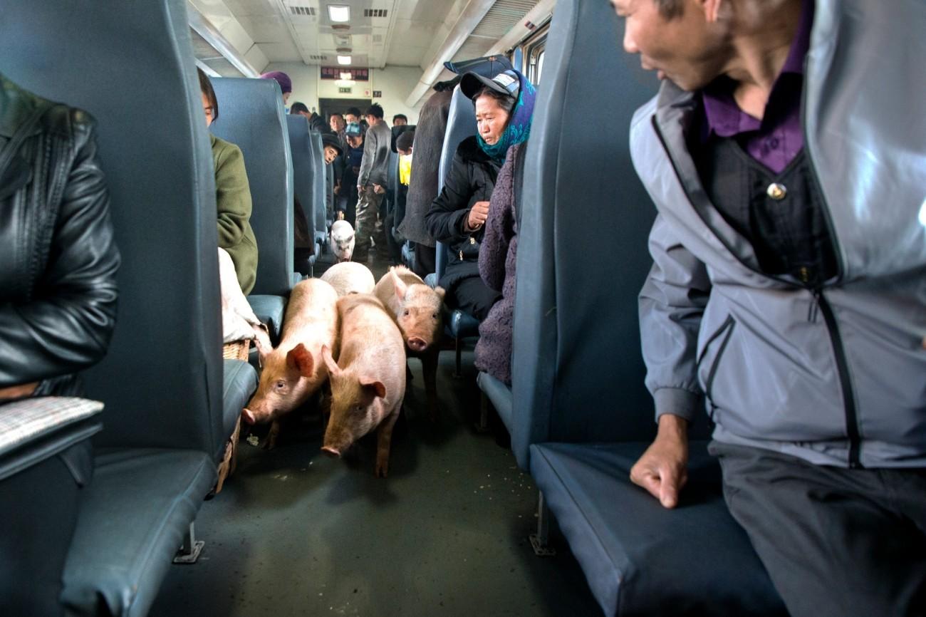 Поощрительная премия в категории «Путешествия и приключения», 2020. Неожиданные пассажиры в поезде на юго-западе Китая. Автор Сянган Чен