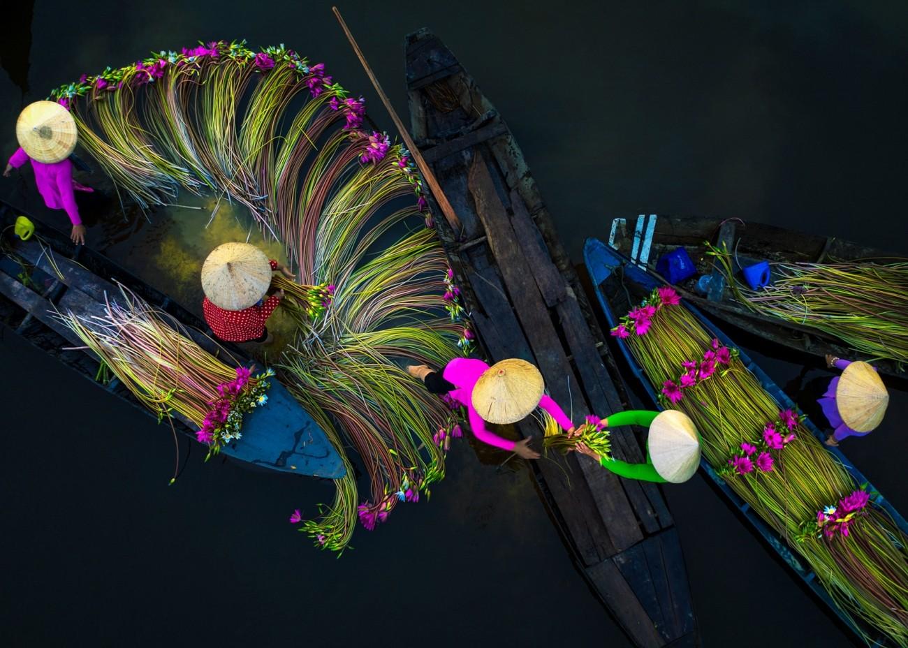 Поощрительная премия в категории «Путешествия и приключения», 2020. Сбор цветов в дельте реки Меконг. Автор Чунг Фам Хай