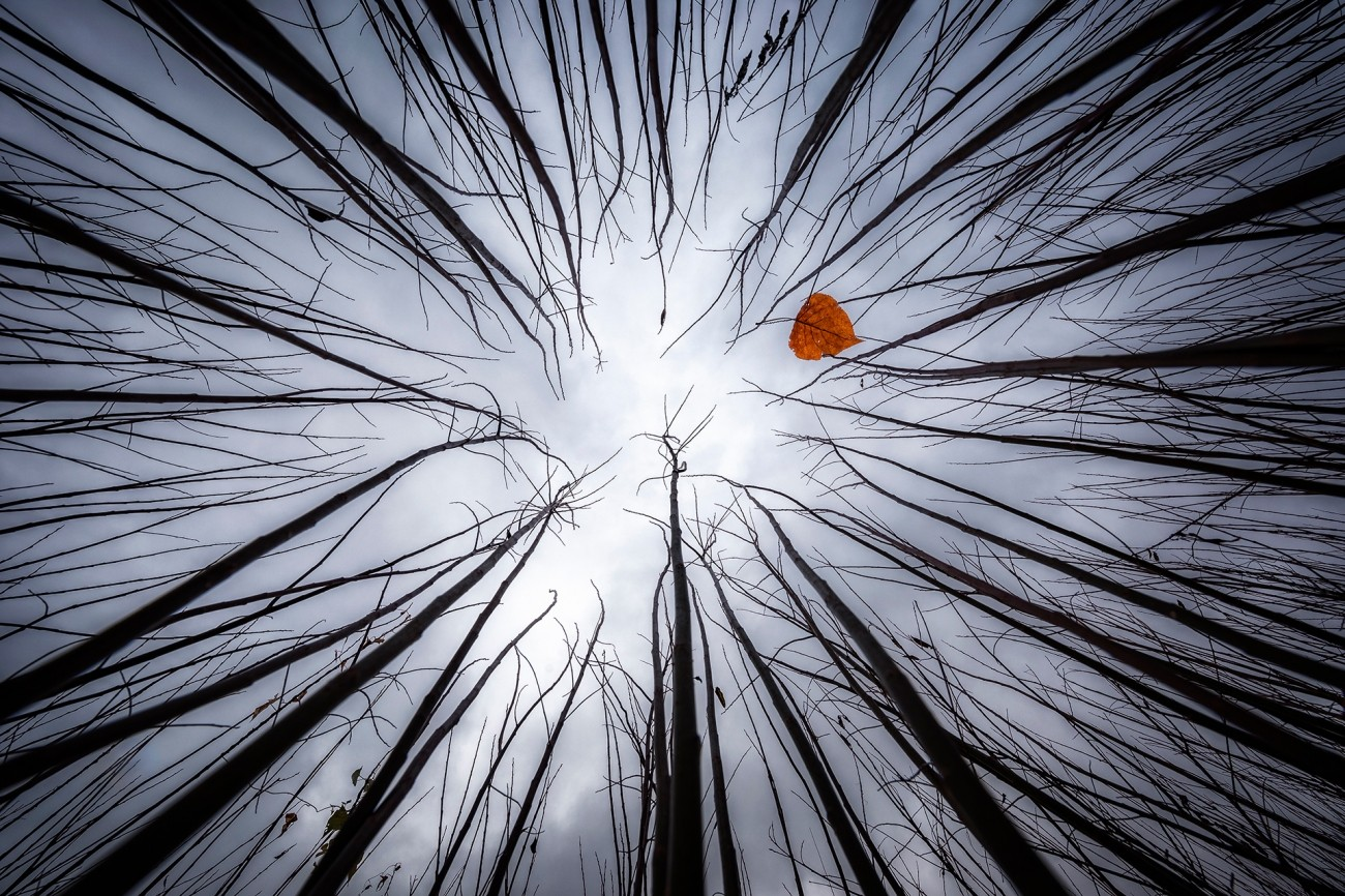 Поощрительная премия в категории «Красота природы», 2020. «Осень Тима Бёртона». Автор Хуан Гарсия Лукас